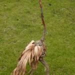 Vogels van wrakhout - Reiger in het veld