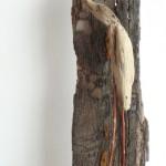 Vogels van wrakhout - Verlegen vogel